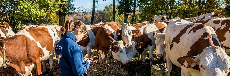 Agent d'élevage laitier ou vacher