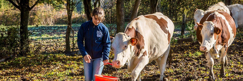 Métier Responsable d'élevage