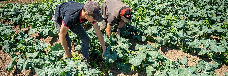 Métier Agent de cultures légumières de plain champs