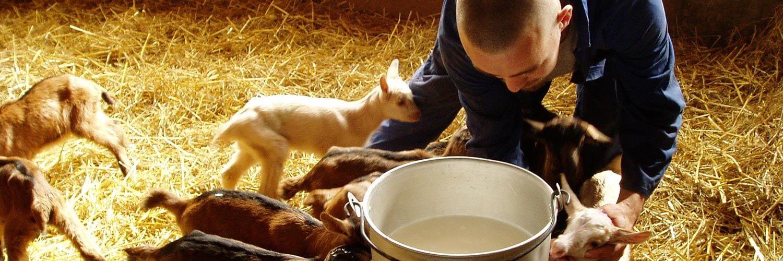 Métier Technicien d'élevage