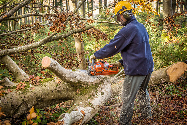 Témoignage agent d'exploitation forestière