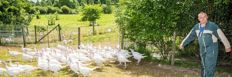 Agent d'élevage avicole