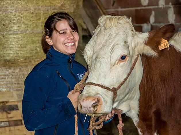 Témoignage agent d'élevage bovin