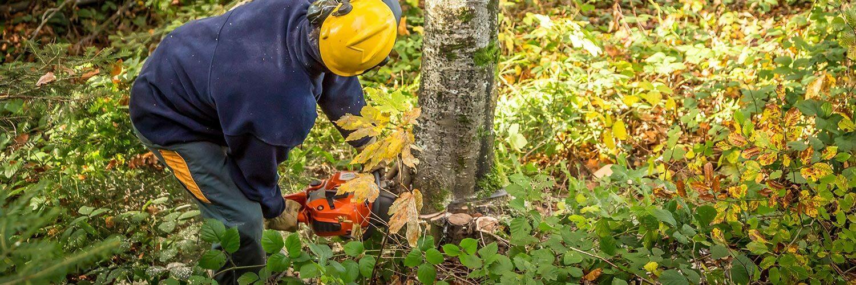 Agent d'exploitation forestière