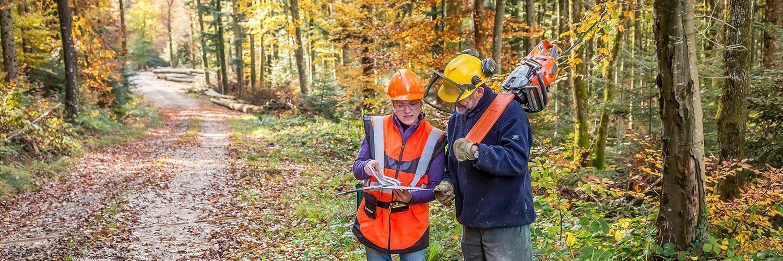 Ingénieur forestier