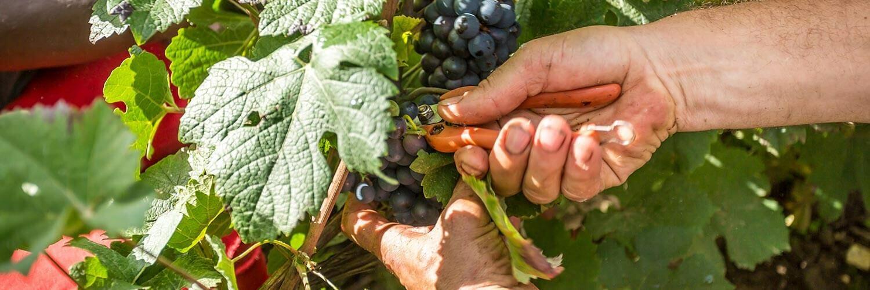 Métier Agent tractoriste en viticulture