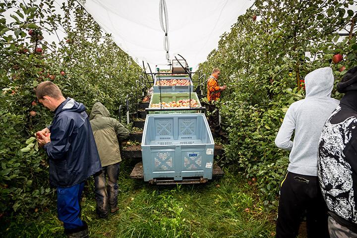 métier de l'arboriculture