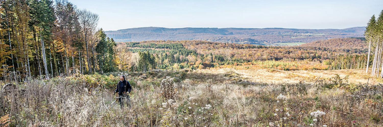 métier sylviculture forêt scierie