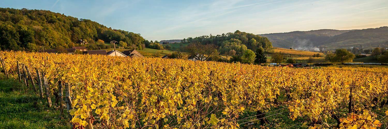 Occitanie Viticulture