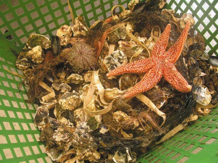 Aquaculture en Bretagne