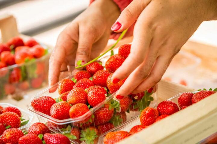 Maraîchage : mise des fraises en barquettes