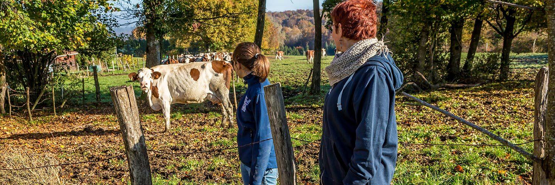 Finistère élevage laitier