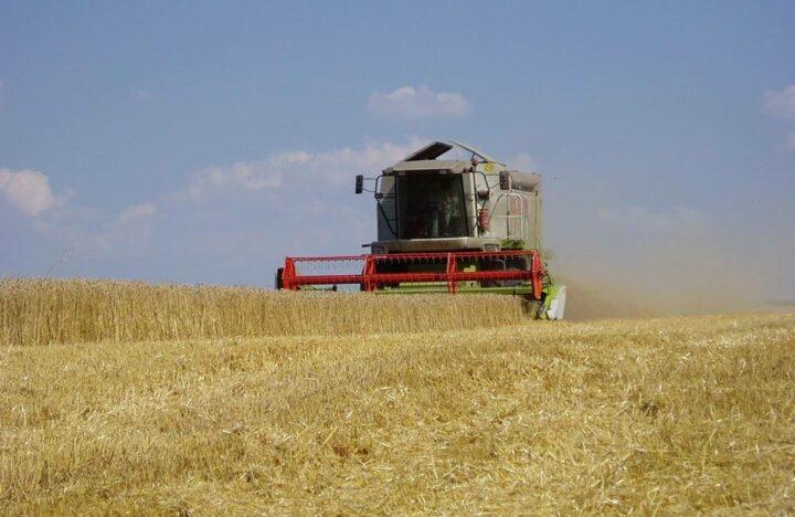 Morbihan grandes cultures blé
