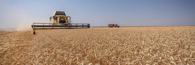 Centre Val de Loire grandes cultures blé