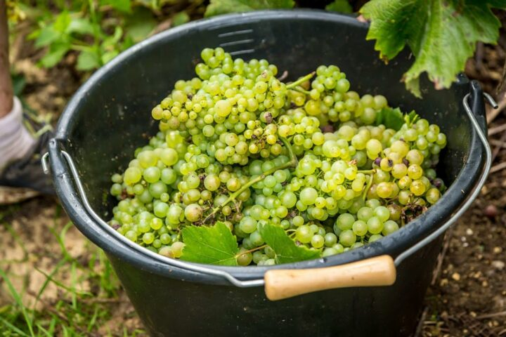 Viticulture en BFC