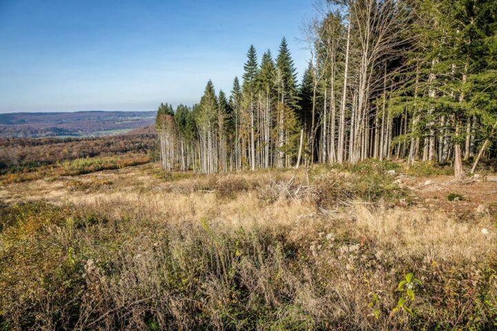 Une forêt en BFC