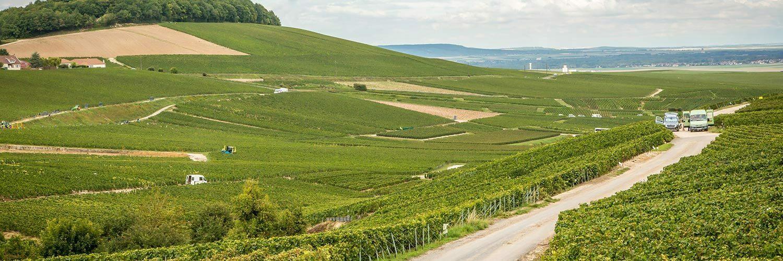 Bourgogne Franche Comté viticulture