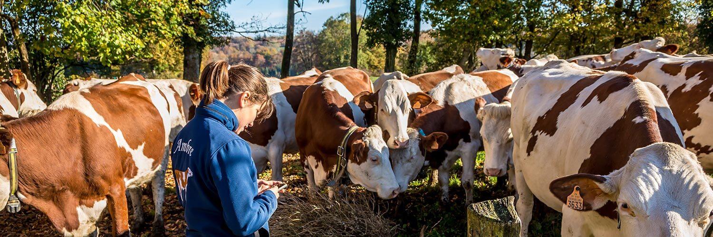 Auvergne Rhône-Alpes bovins