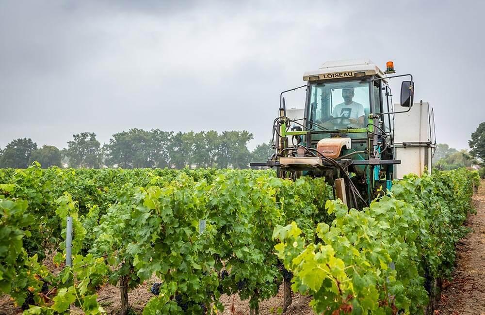 Auvergne Rhône Alpes Viticulture