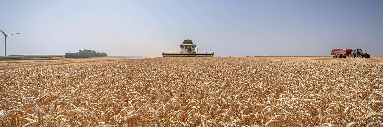 Gard grandes cultures blé