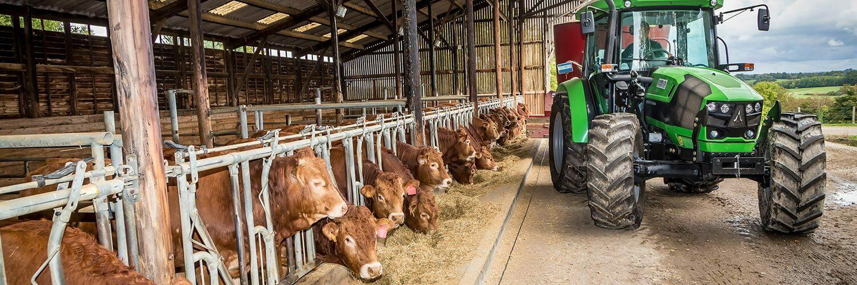 Hautes Pyrénées élevage bovin