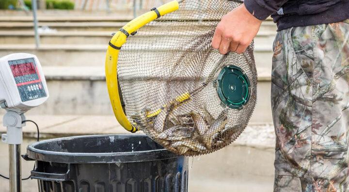 Sortie des poissons des bacs