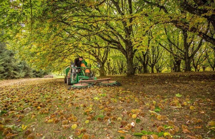 Limousin Arboriculture Châtaigne
