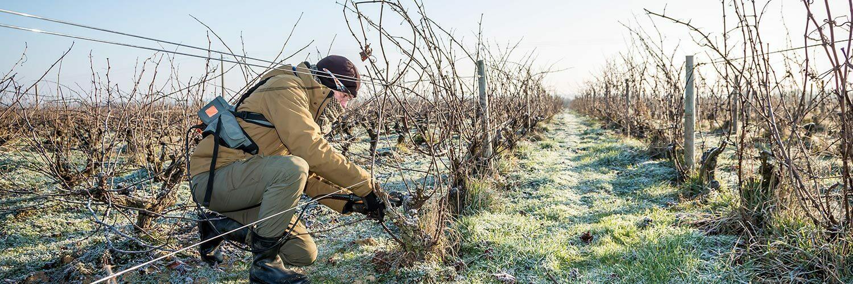 Dordogne viticulture
