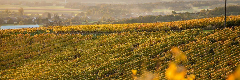 Gironde viticulture