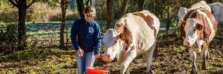 Normandie élevage bovin laitier