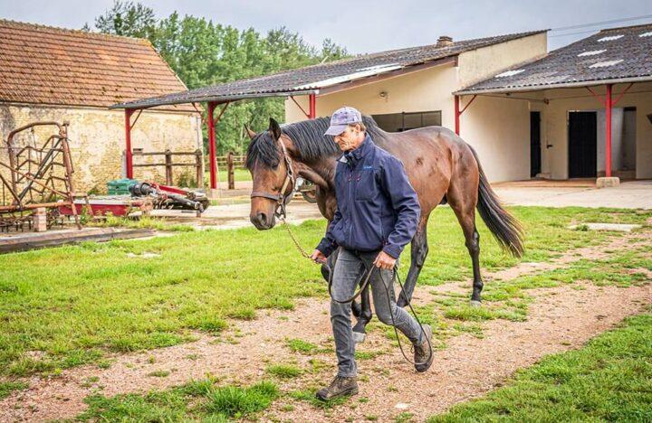 Normandie élevage équin
