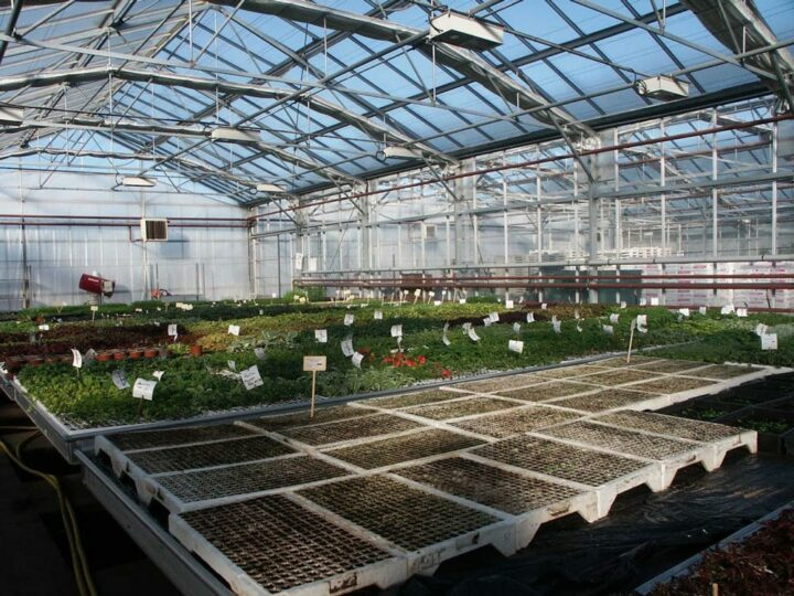 Horticulture sous serre